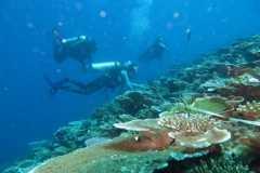 BTNKT: 60 persen karang di kawasan konservasi Togean alami kerusakan